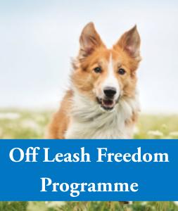 Brunnock Canine Solutions, Limerick Dog Training - Off Leash