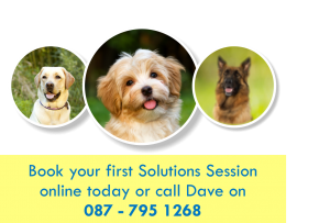 Brunnock Canine Solutions - Dog Trainer Limerick